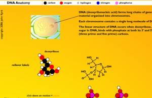 biologia interativa