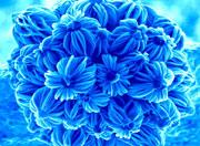 nano flores