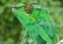 camaleaocores-destaque