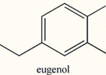 eugenol-destaque