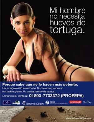 modelo argentina tartaruga