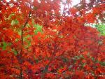 cores folhas plantas