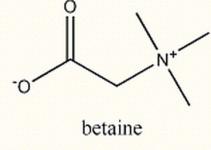 betaine-destaque