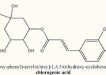 acido-clorogenico-destaque